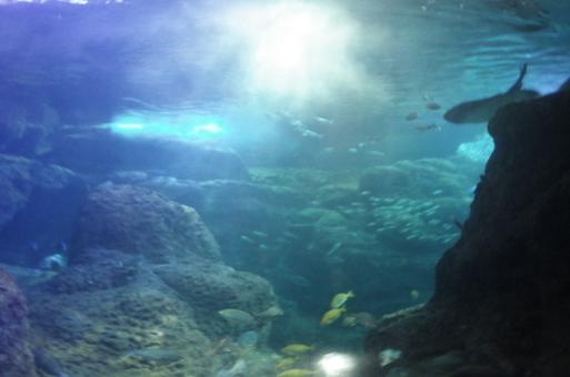 江ノ島水族館とシーキャンドル、関東三大イルミネーションの旅